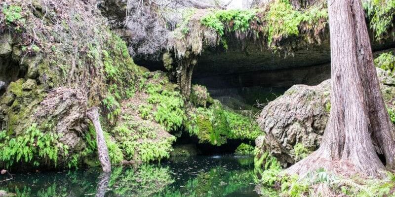 Discovering the secrets of Westcave Preserve