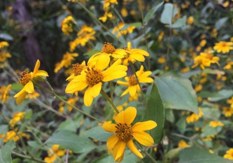 flowers at turkey creek trail